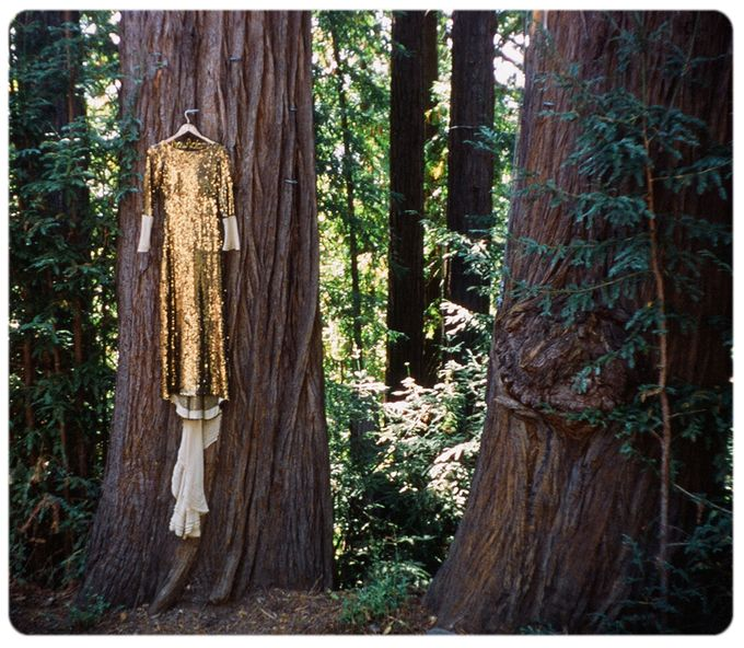 Wedding in the forest of the Santa Cruz Mountains by Stereo Photo Album - 002