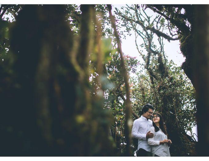 Nuzian & Haziq Elopment by White Carousel Photography - 006
