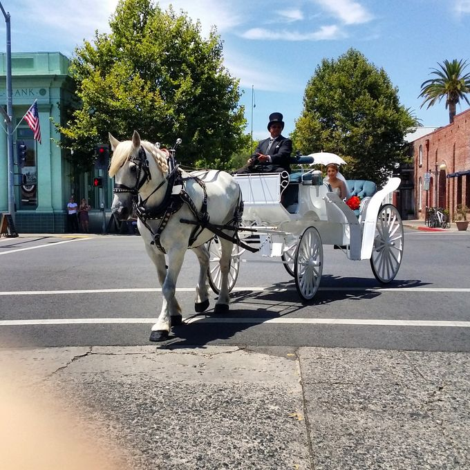 Wine Country Weddings by Wine Country Wedding Carriages - 007