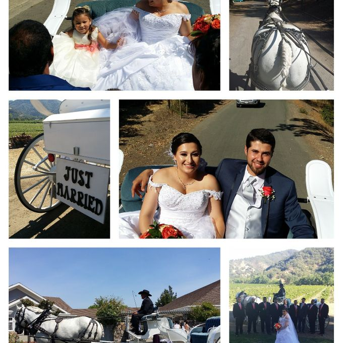 Wine Country Weddings by Wine Country Wedding Carriages - 001