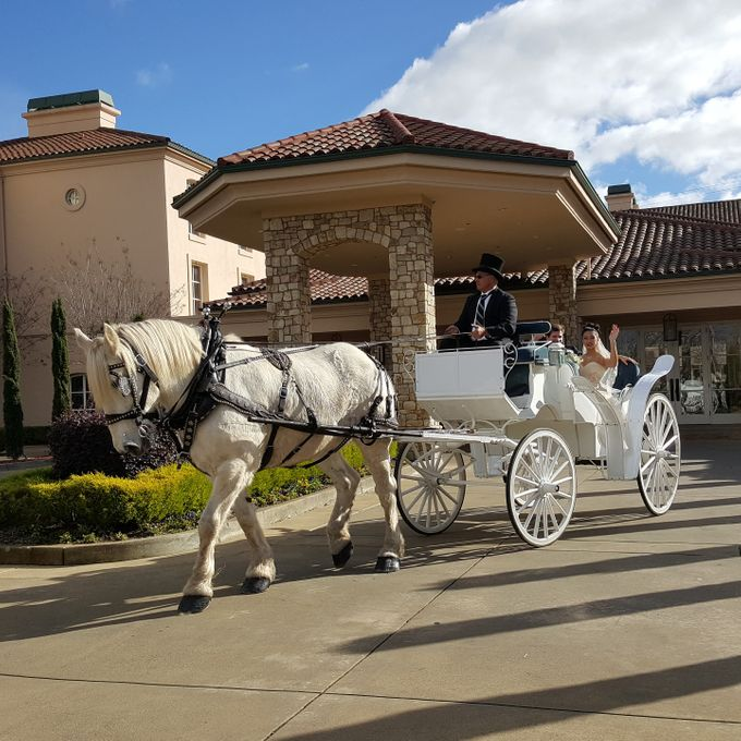 Wine Country Weddings by Wine Country Wedding Carriages - 003