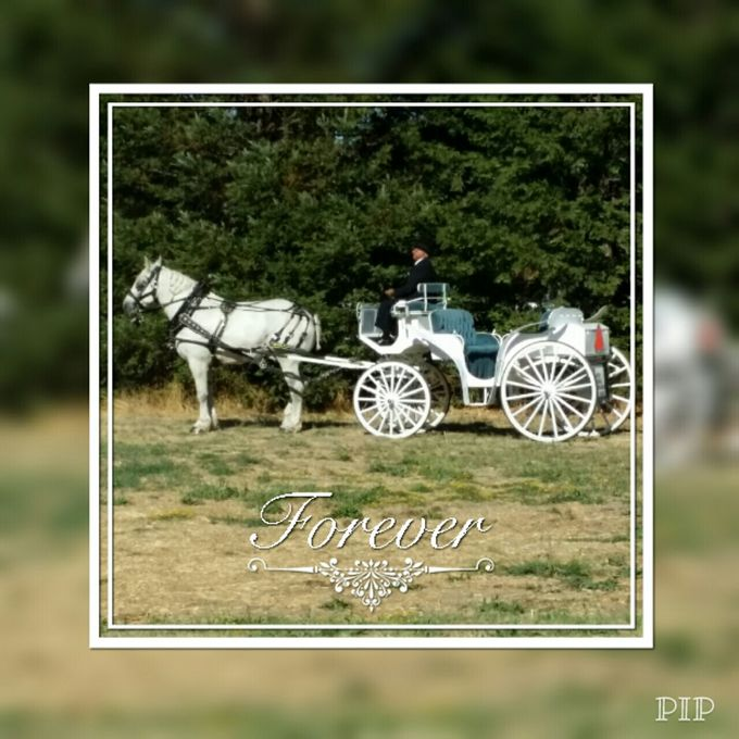 Wine Country Weddings by Wine Country Wedding Carriages - 004