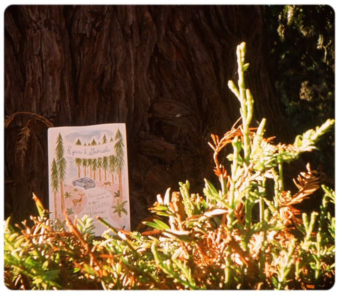 Wedding in the forest of the Santa Cruz Mountains by Stereo Photo Album - 001