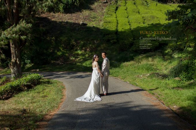 The best of  Pre-Wedding in Cameron Highland by maxtography - 036