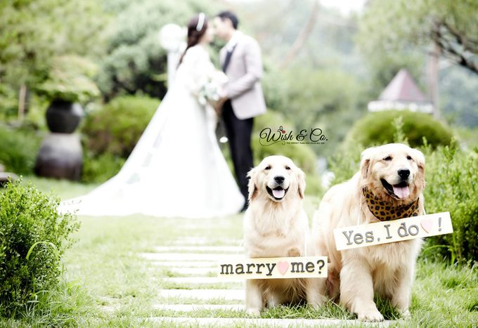 We just got married - Indoor by Wish & Co. - 026