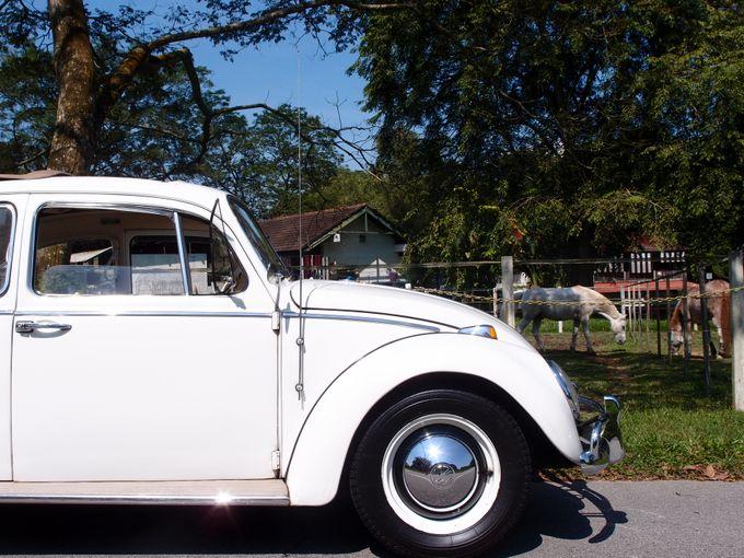 Wedding Car Rentals by WhiteWedding Cars - 010