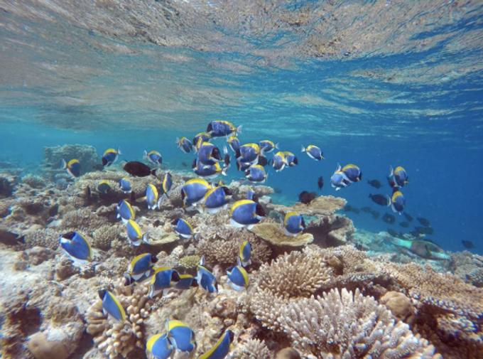 water sport activities by Plumeria Maldives - 005