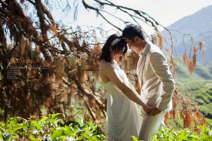 The best of  Pre-Wedding in Cameron Highland by maxtography - 041