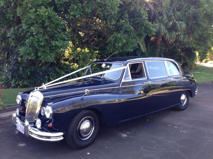 Classic Daimler major Magestic Wedding Car by Tic Tac Tours & Premier Limousines - 003