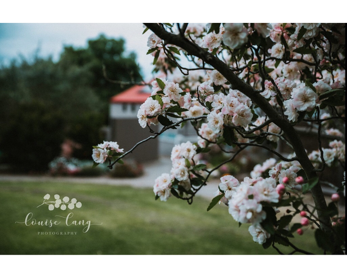 DIY Wedding Venue in the Yarra Valley by Araluen Boutique Accommodation - 010