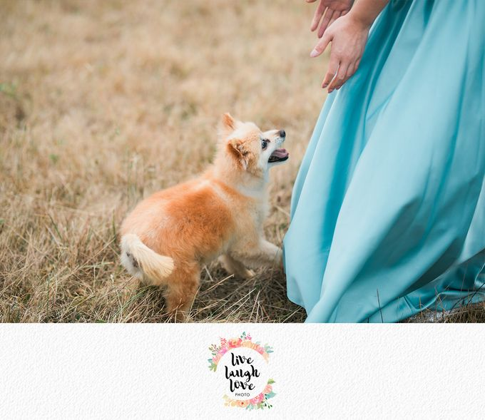 Bonnie & Kevin - Love Story by Lena Lim Photography - 005