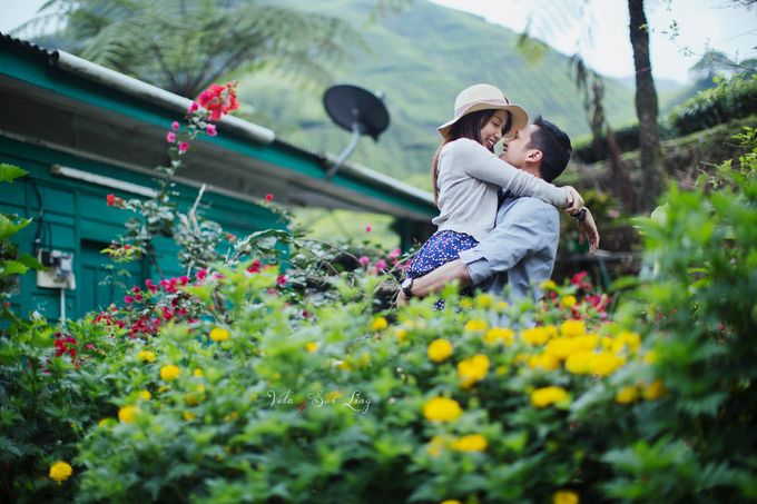 The best of  Pre-Wedding in Cameron Highland by maxtography - 002