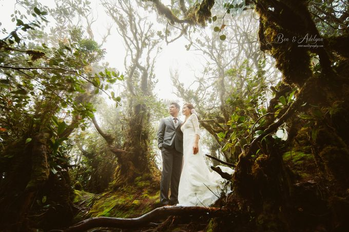 The best of  Pre-Wedding in Cameron Highland by maxtography - 009
