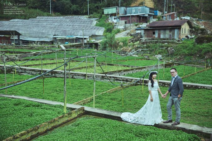 The best of  Pre-Wedding in Cameron Highland by maxtography - 027