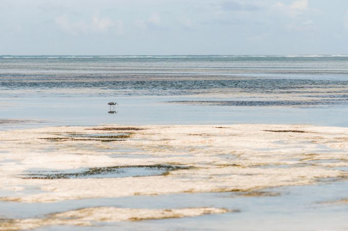 Honeymoon in Zanzibar by Evelina Korneevets - 010