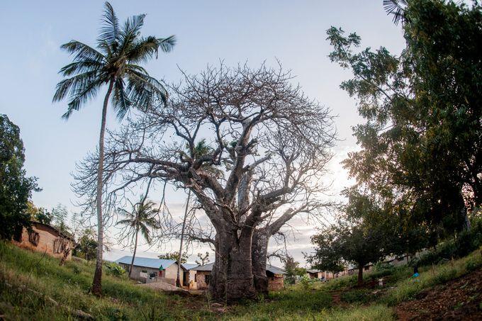 Honeymoon in Zanzibar by Evelina Korneevets - 029