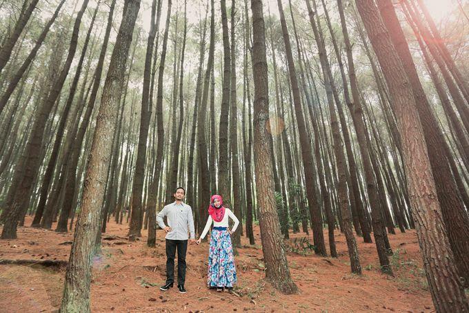 Romance Between Desert and Pine by ridzkysetiaji photo - 009