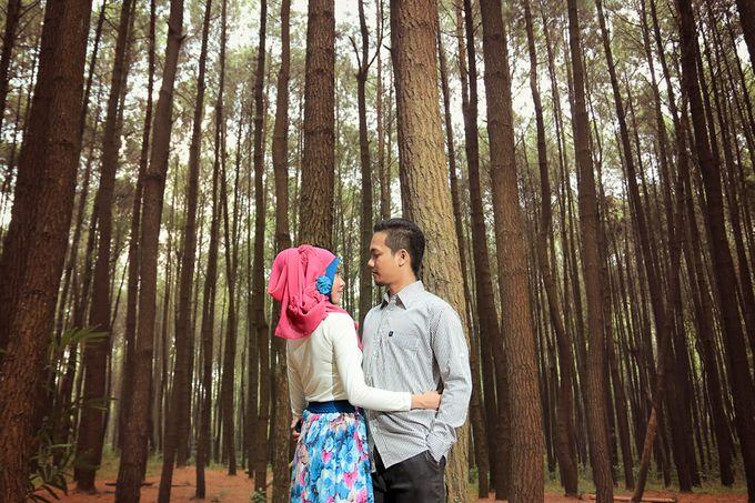 Romance Between Desert and Pine by ridzkysetiaji photo - 012