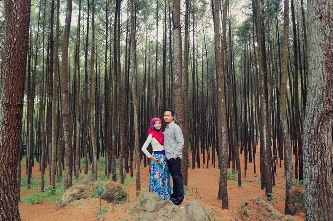 Romance Between Desert and Pine by ridzkysetiaji photo - 013