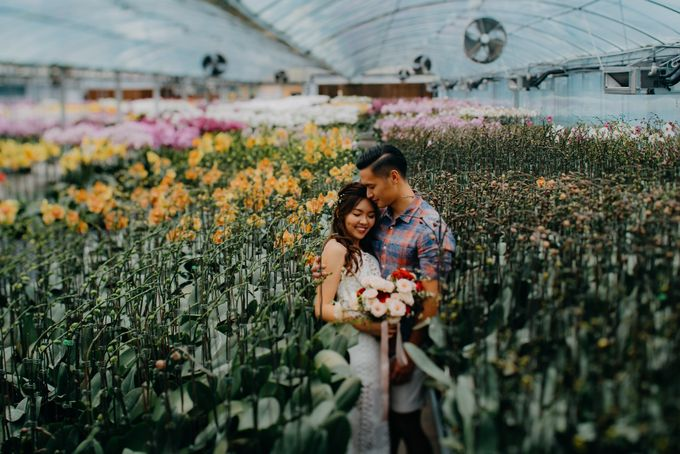 Flower Fields in Singapore by Hong Ray Photography - 004