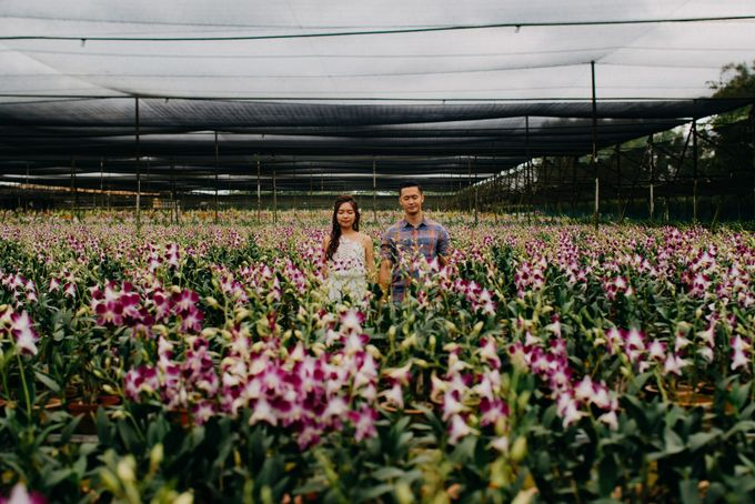 Flower Fields in Singapore by Hong Ray Photography - 006