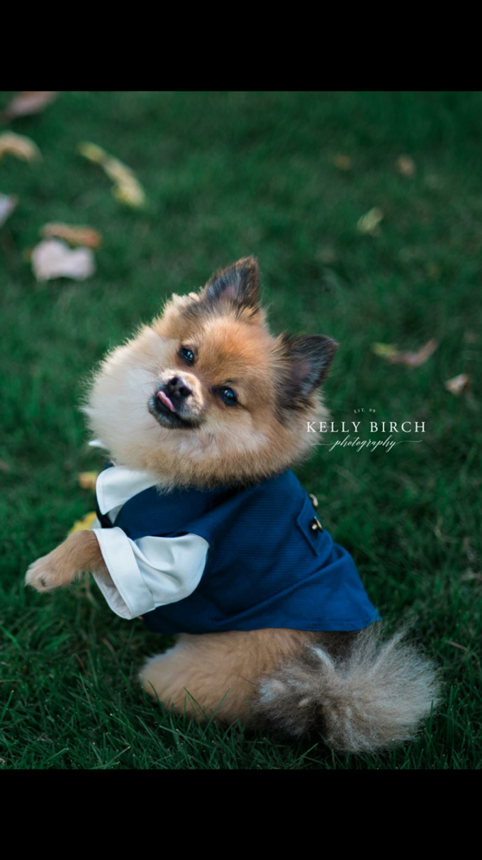 Highlight Gallery 2015 by Kelly Birch Photography - 022