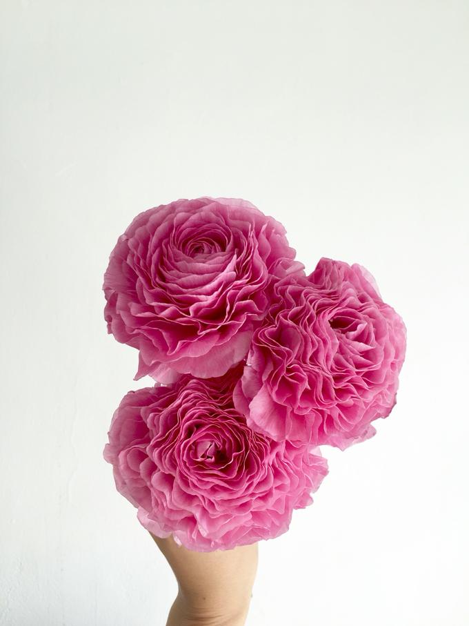 Floral Journal  by D'Alexandra Flowers - 045