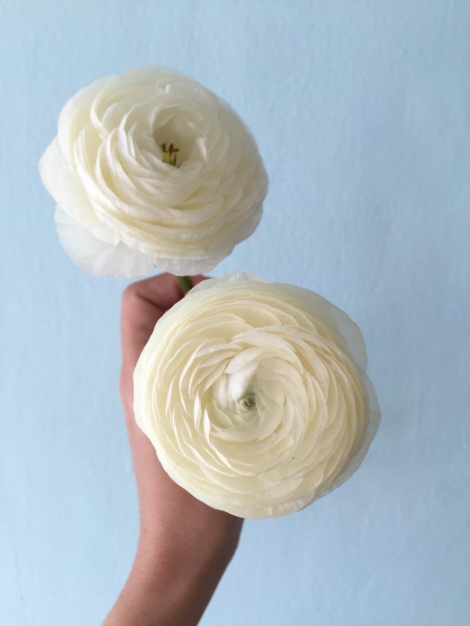 Floral Journal  by D'Alexandra Flowers - 042