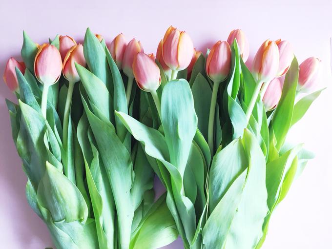 Floral Journal  by D'Alexandra Flowers - 006