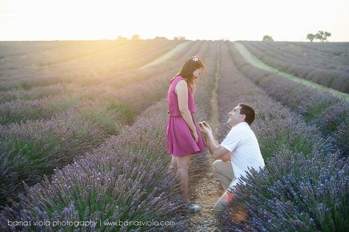 Surprise Proposal in Lavender Field by Barnas Viola Photography - 001
