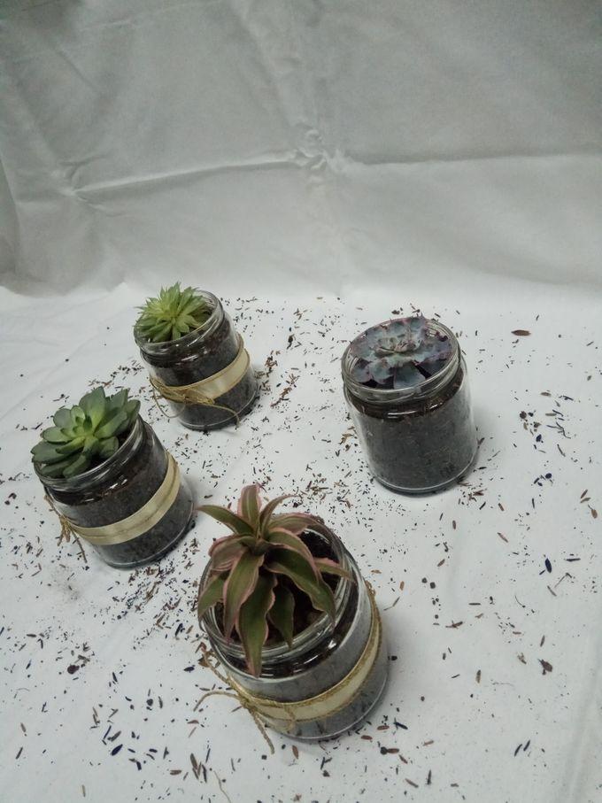 Succulent In a Jar 01 by Rhea - 003