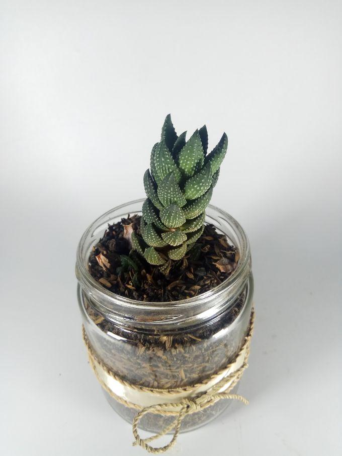 Succulent In a Jar 05 by Rhea - 004