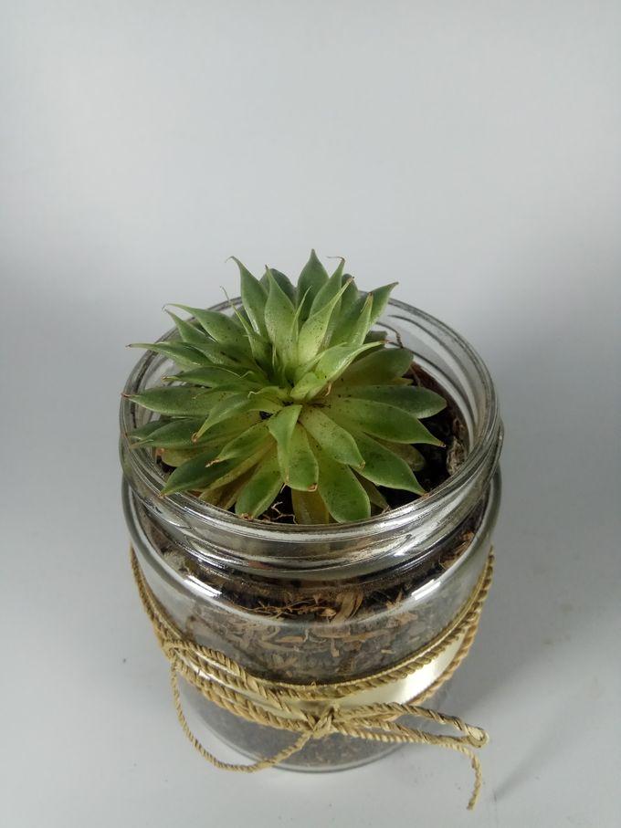 Succulent In a Jar 05 by Rhea - 006