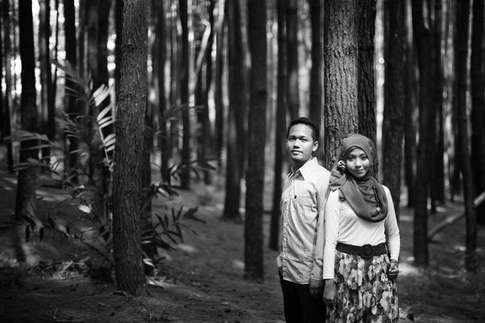 Romance Between Desert and Pine by ridzkysetiaji photo - 018