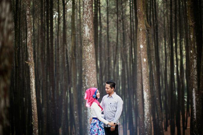 Romance Between Desert and Pine by ridzkysetiaji photo - 019