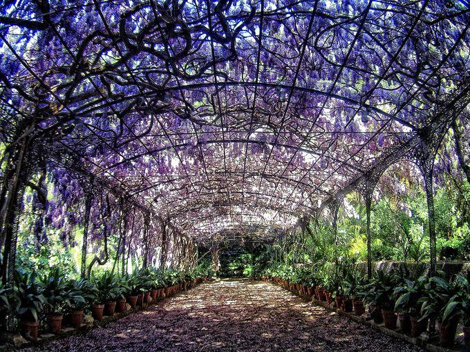 Wedding in Jardin Botanico by Eventonova - 007