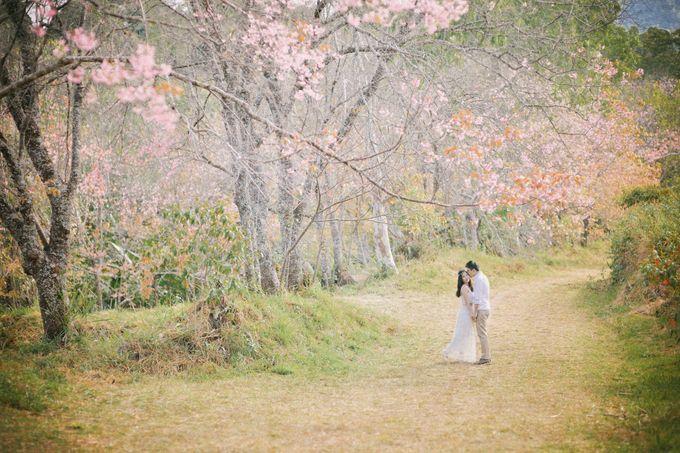 Kew Mae Pan pre wedding in Chiangmai by Lovedezign Photography - 008