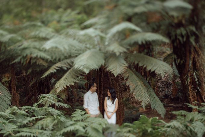 Prewedding Shoot Conquering Different Natural Sights of Victoria Australia by fire, wood & earth - 002