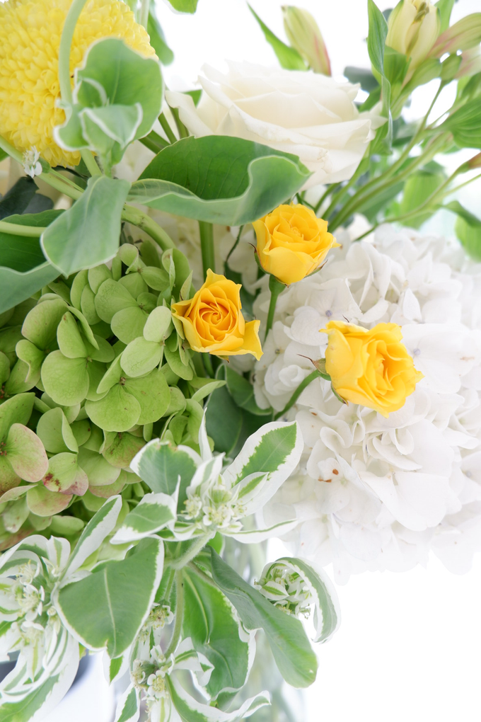 All about Hydrangea by Mfreshflowers - 011
