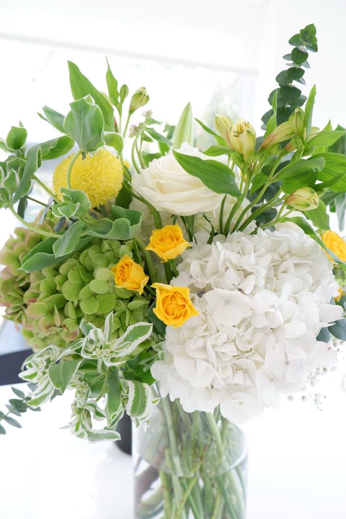 All about Hydrangea by Mfreshflowers - 013
