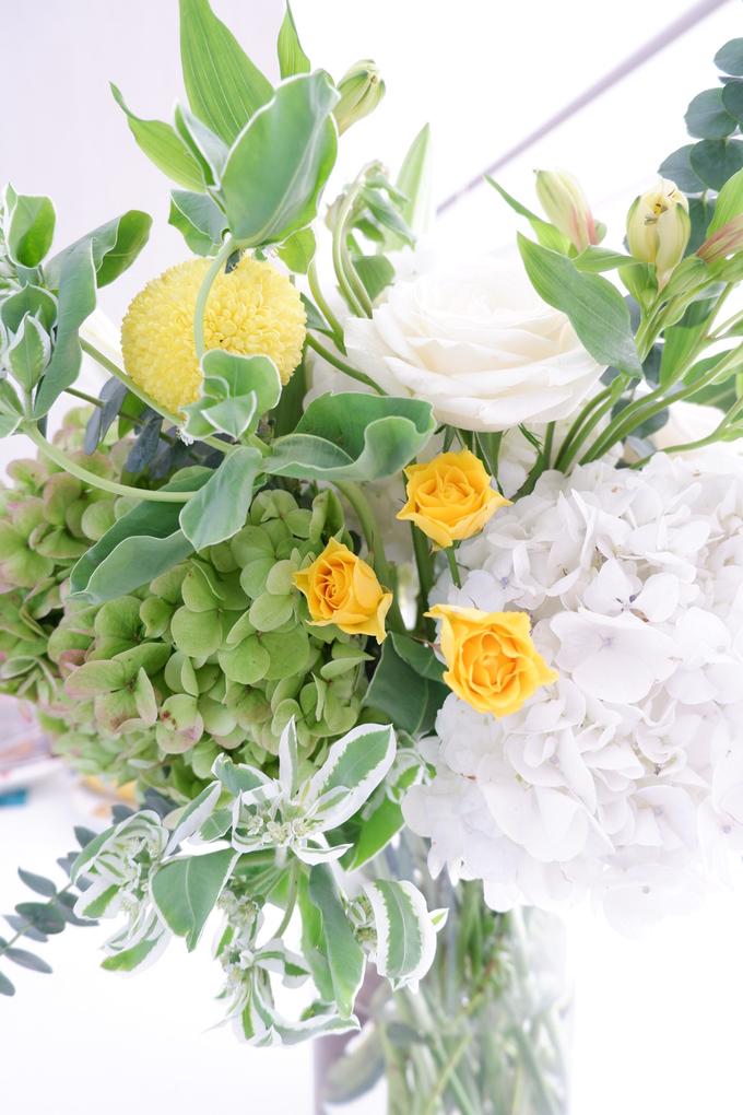 All about Hydrangea by Mfreshflowers - 017