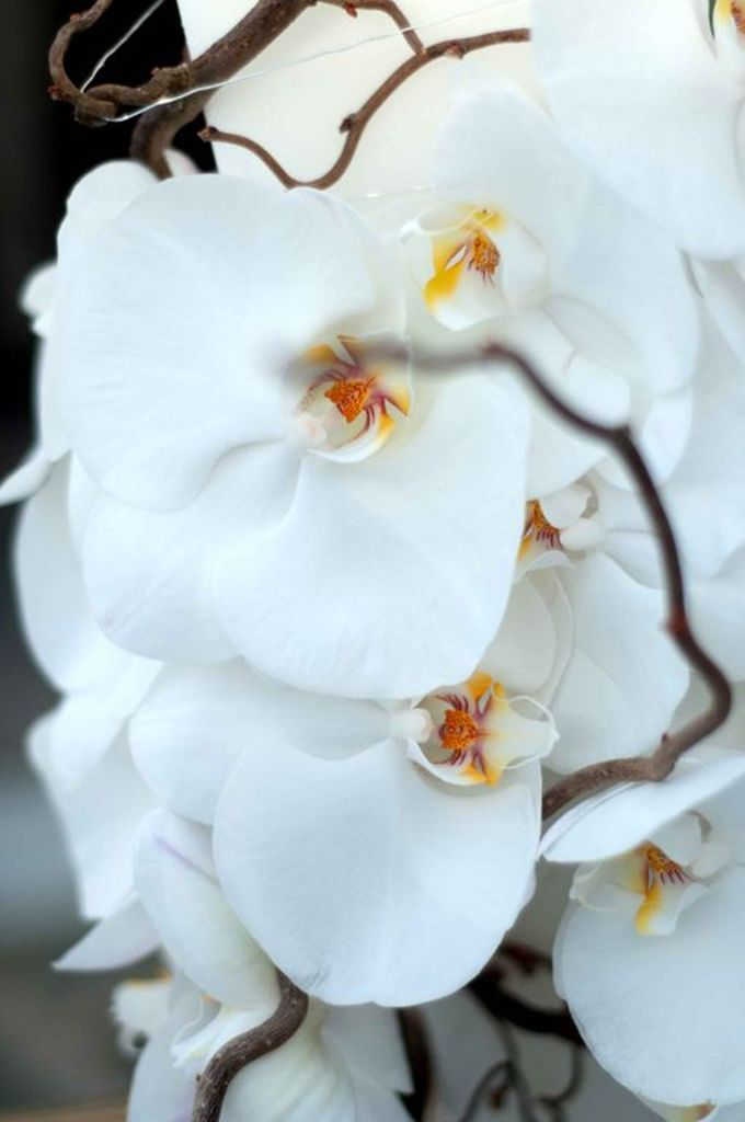 wedding with Phalenopsis by By alexia - 011