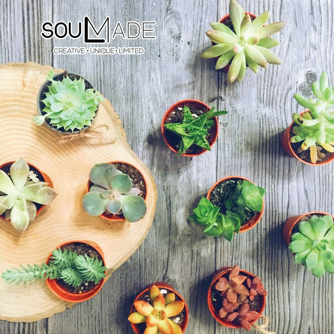 Mini Plant Pot by Soulmade Design - 006