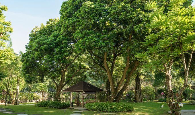 The Royal Garden by Royal Ambarrukmo Yogyakarta - 004
