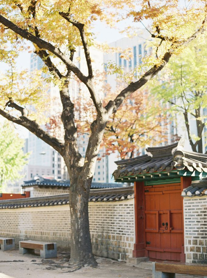 Fall Wedding Inspiration at Deoksugung by Honour and Blessing Events - 006