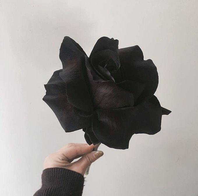Black & White by MyVoilà - 002