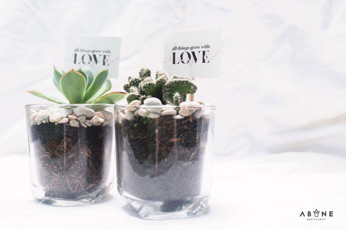 Wedding Souvenir for Dimas and Jasmine by ABANE Succulent - 002