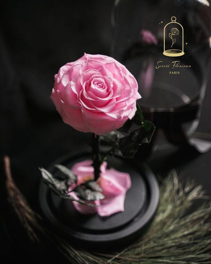 Eternal Rose by Sorcie Florisan - 004
