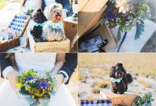 Ivan & Cindy Wedding by PetQuisite