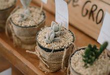 Wedding Icha & Ivan - Souvenir Sukulen Goni Pita 8cm by Greenbelle Souvenir